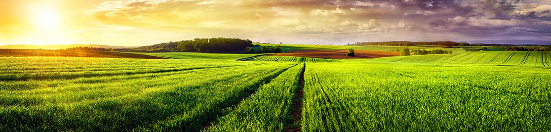Linia de Agricultură